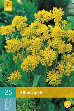 Bulbes à fleurs plantation automne : Allium  : Allium Moly