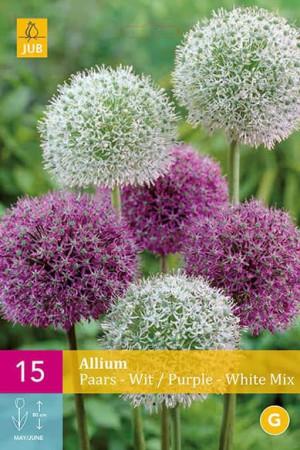Bulbes à fleurs plantation automne : Allium  : Allium Mélange blanc et pourpre