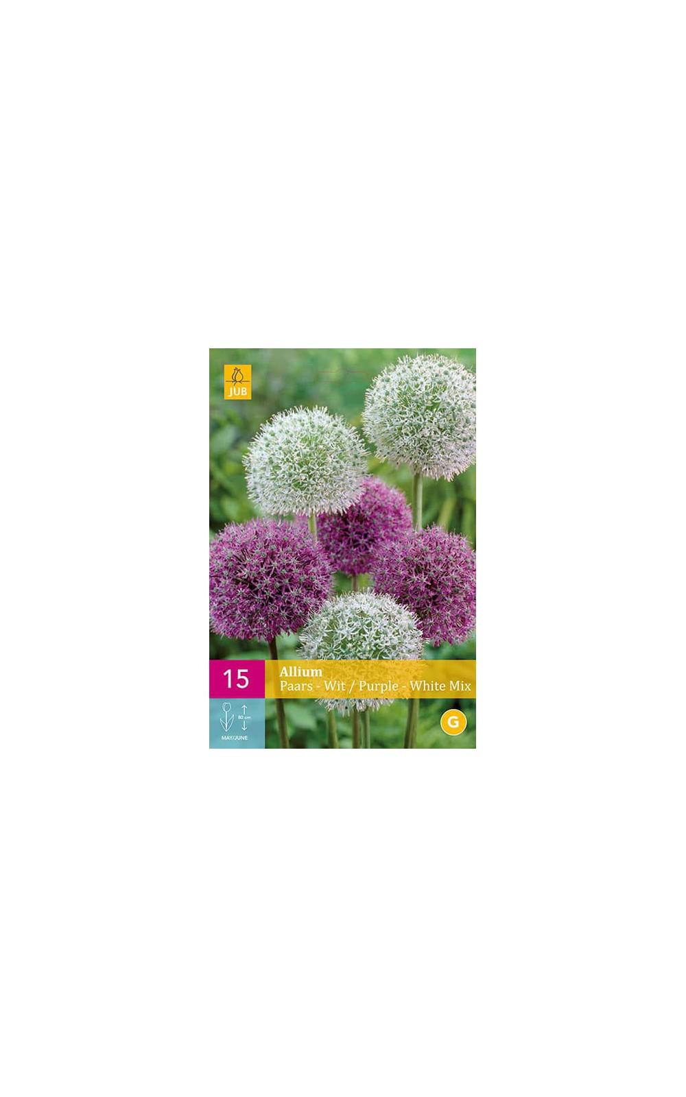 Bulbes à fleurs : Allium Mélange blanc et pourpre : Hello ...