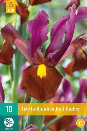 Bulbes à fleurs plantation automne : Iris hollandais : Iris hollandais Red Ember