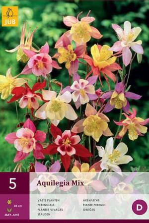 Bulbes à fleurs plantation printemps : Ancolie En mélange