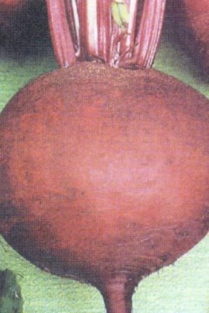 Semences potagères : Betterave potagère Detroit