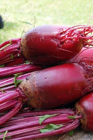 Semences potagères : Betterave potagère Cylindra BIO