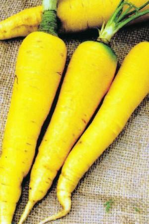 Semences potagères : Carotte Jaune du Doubs