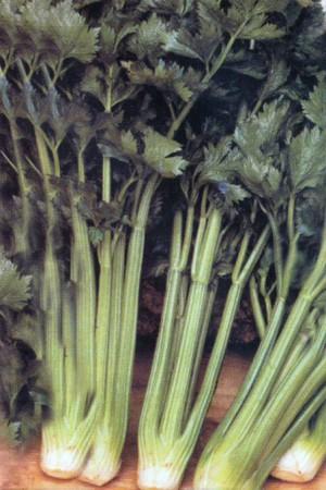 Semences potagères : Céleri à côtes Tall Utah