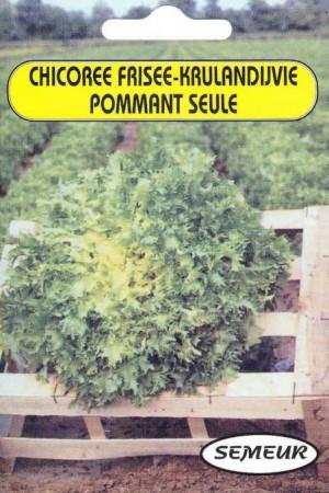 Semences potagères : Chicorée frisée Grosse pommant seule