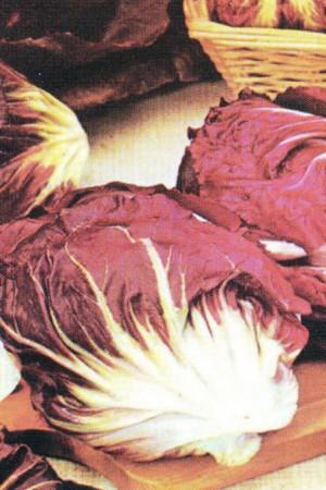 Semences potagères : Chicorée sauvage Rouge de Verone