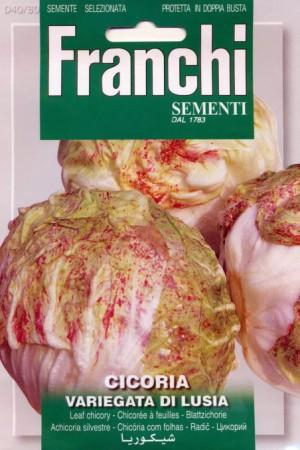 Semences potagères : Chicorée sauvage Variegata di Lusia