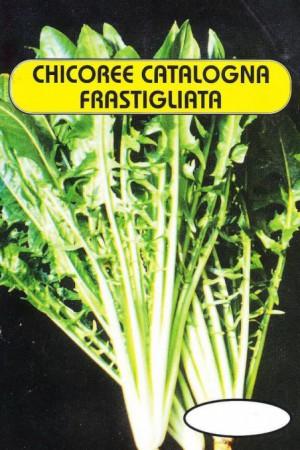 Semences potagères : Chicorée sauvage Cicoria Catalogna Frastagliata