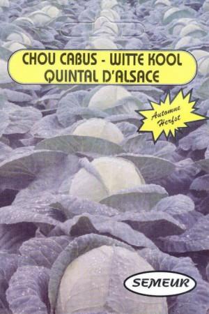 Semences potagères : Chou cabus blanc Quintal d'Alsace