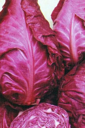 Semences potagères : Chou rouge Kalibos