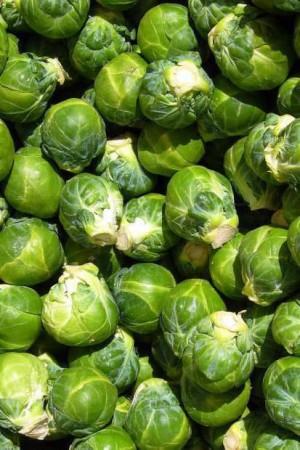 Semences potagères : Chou de Bruxelles Long Island BIO