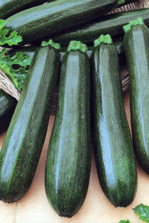 Semences potagères : Courgette Diamant F1