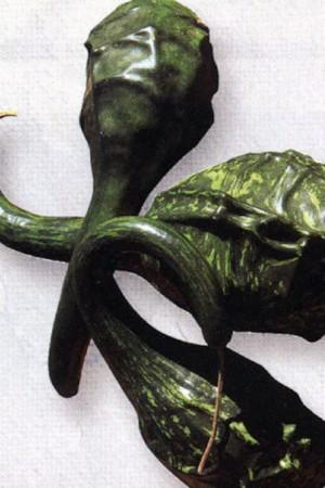 Semences potagères : Coloquinte Caveman's club