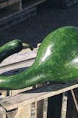 Semences potagères : Coloquinte Diepper