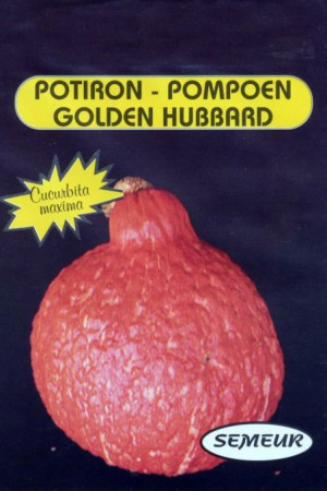 Semences potagères : Coloquinte Golden Hubbard