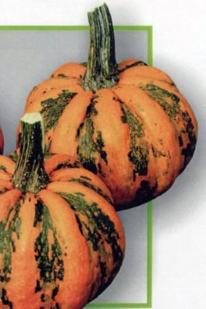 Semences potagères : Coloquinte Kamo Kamo