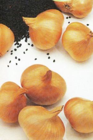 Semences potagères : Echalote à semer Bonilla F1