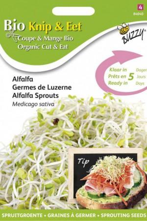 Semences potagères : Graines à germer Luzerne BIO
