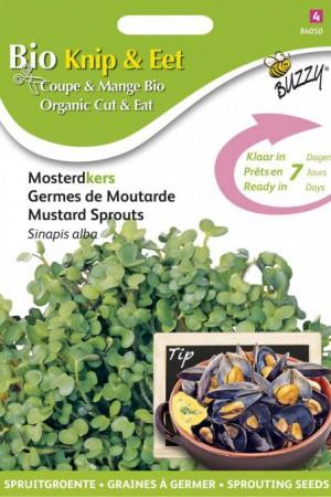 Semences potagères : Graines à germer Moutarde BIO