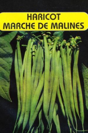 Semences potagères : Haricot à rames Marché de Malines