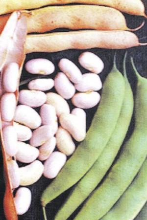 Semences potagères : Haricot à rames Emergo