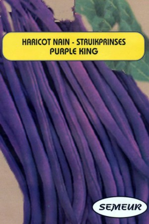 Semences potagères : Haricot nain vert mangetout Purple King