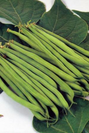 Semences potagères : Haricot nain vert mangetout Cogito