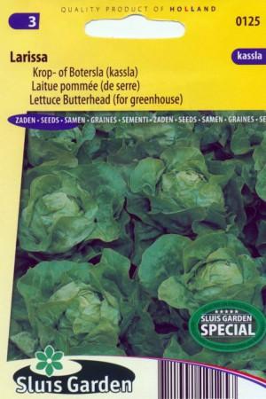 Semences potagères : Laitue pommée de serre Larissa