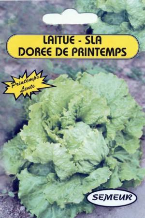 Semences potagères : Laitue pommée de pleine terre Dorée de printemps