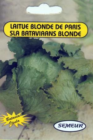 Semences potagères : Laitue pommée de pleine terre Blonde de Paris