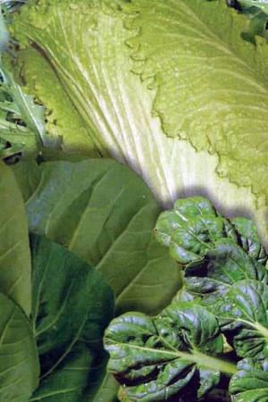 Semences potagères : Légumes asiatiques En mélange