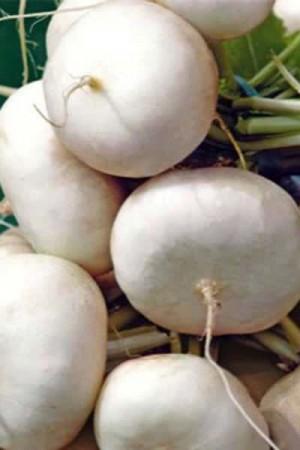 Semences potagères : Navet Blanc plat BIO