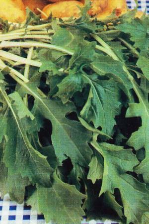 Semences potagères : Quesse Namenia
