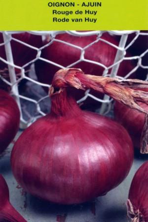 Semences potagères : Oignon Rouge de Huy