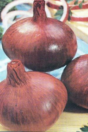 Semences potagères : Oignon Rouge de Brunswick