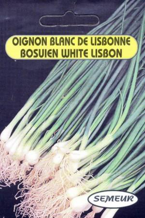 Semences potagères : Oignon de Lisbonne