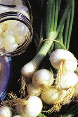 Semences potagères : Oignon de Vaugirard