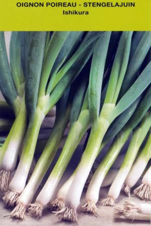Semences potagères : Oignon Ishikura