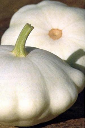 Semences potagères : Patisson Blanc