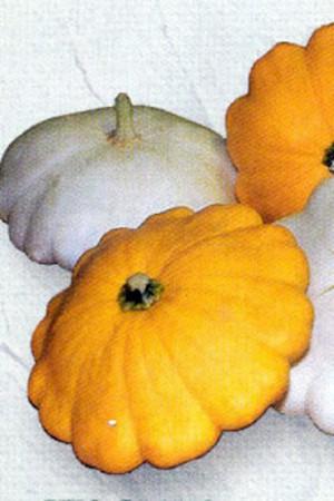 Semences potagères : Patisson en mélange