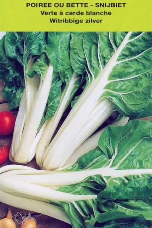 Semences potagères : Poirée (bette) Verte à carde blanche