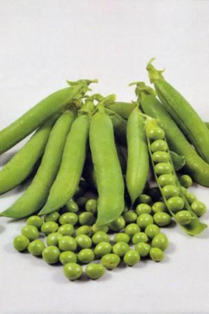 Semences potagères : Pois à écosser Altesse